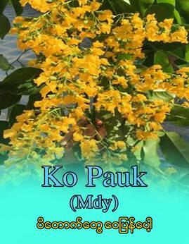 ပိေတာက္ေတြေဝျပန္ေပါ့ - KoPauk(mdy)